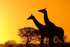 studiare-viaggiando-sud-africa