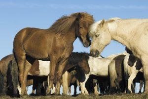 the-horse-theatre-islanda