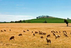 lavoro-nelle-farm-australia